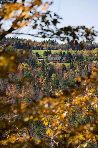 Looking through fall leaves of log home
